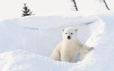 Le 22 avril : le Jour de la Terre nous invite à sauver les espèces