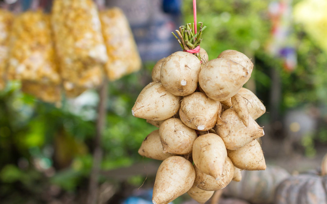 Connaissez-vous le jicama?