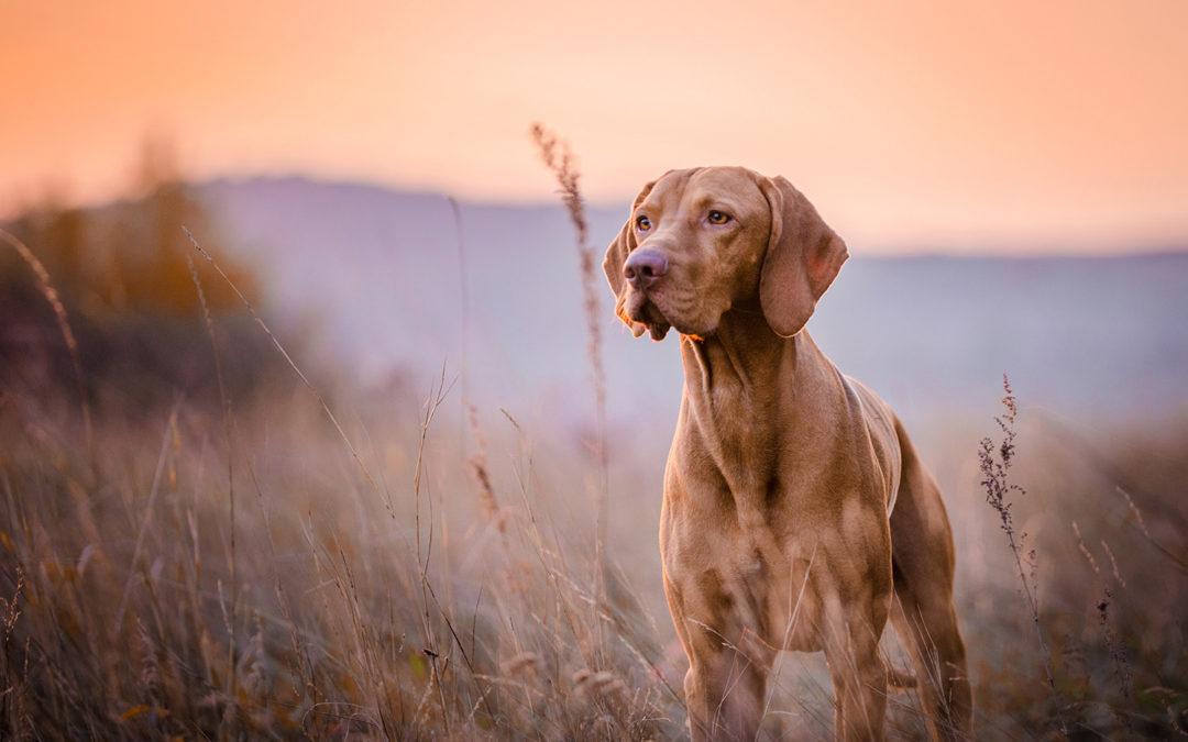Si la santé de votre animal de compagnie vous tient à cœur!