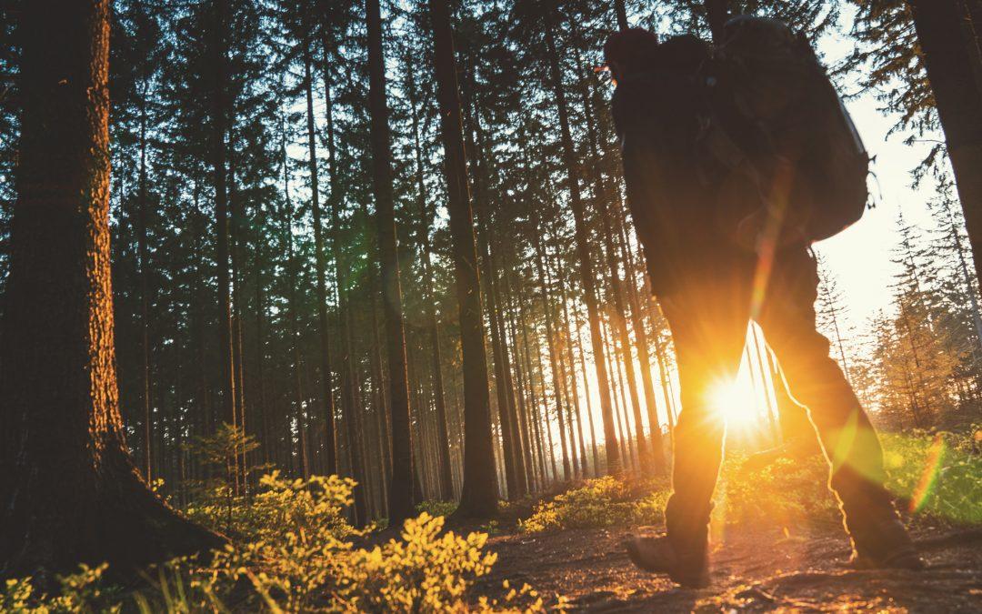 Sylvothérapie : un bain de santé dans la forêt