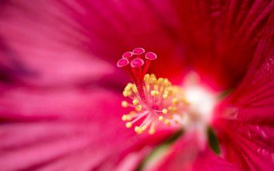 Recettes d'été fleuries