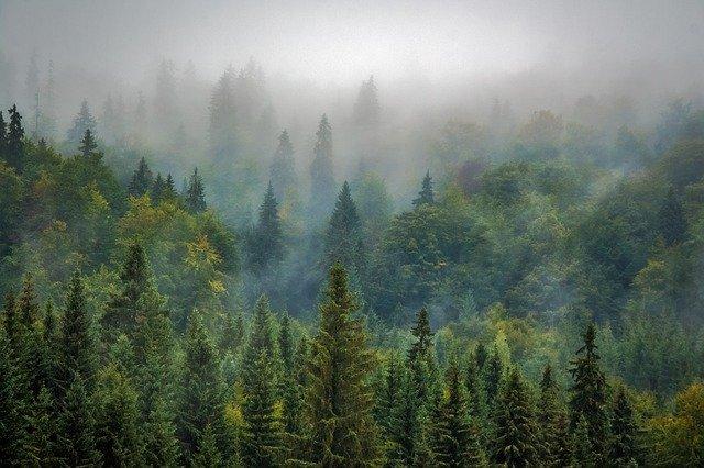 Protocole pour une blessure en forêt